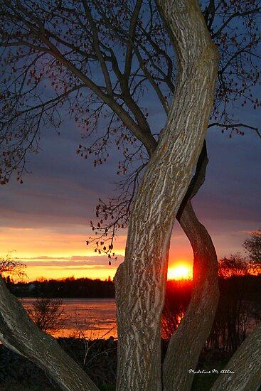 TREE FRAMED SUNSET by Madeline M  Allen