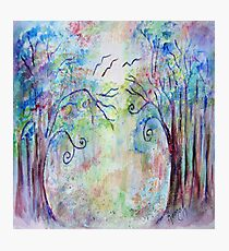 Magical Forest Photographic Print