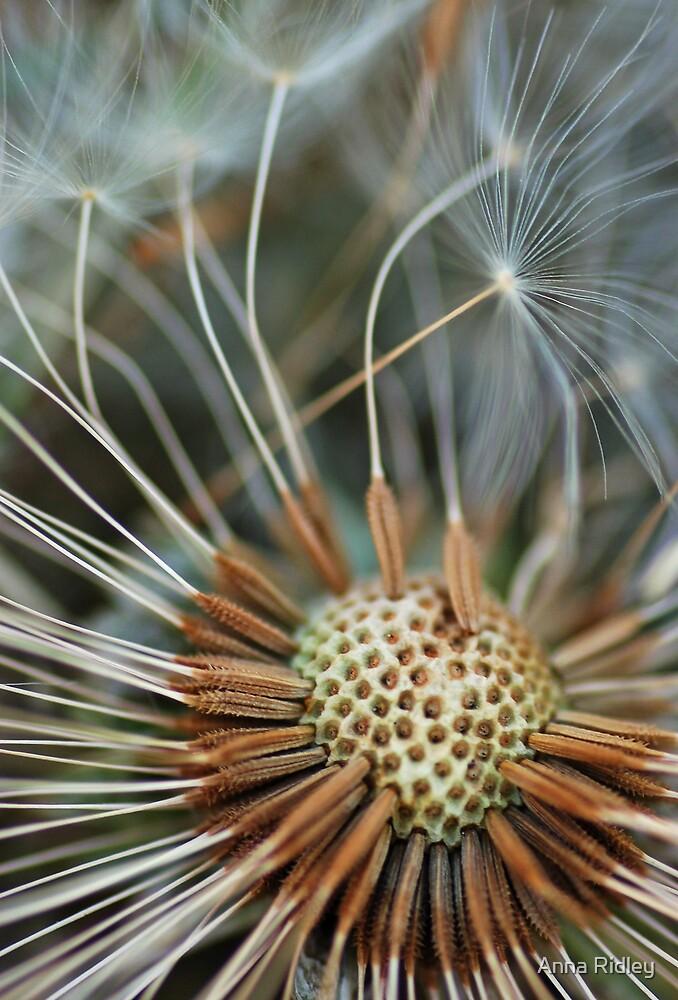 Windblown by Anna Ridley