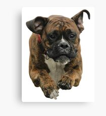 Boxer Dog Flying Canvas Print
