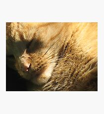 Nugs Sleeps Photographic Print