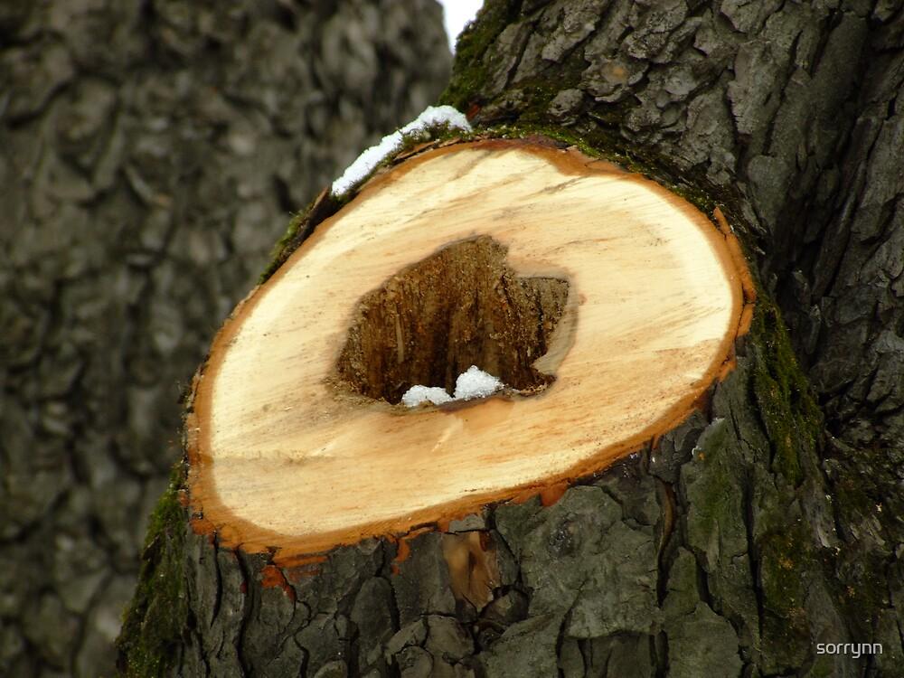 Tree wound by sorrynn