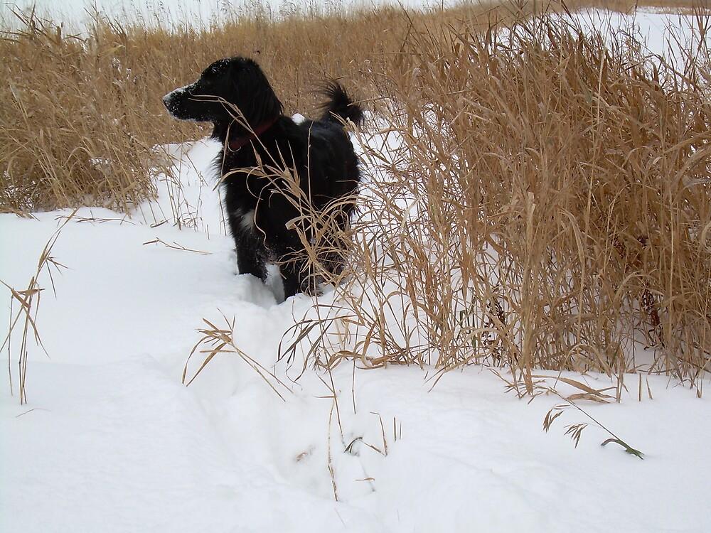 Dog Exploring 1190 by NiftyGaloot