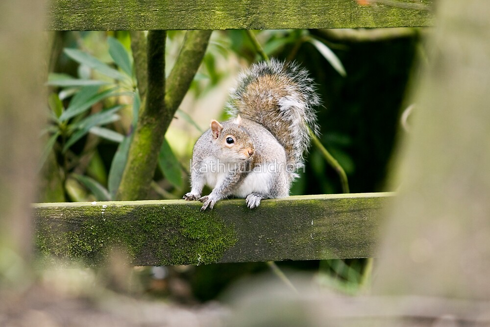 looking at me? by kathywaldron