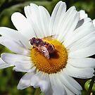 Bee and Daisy by © Joe  Beasley IPA