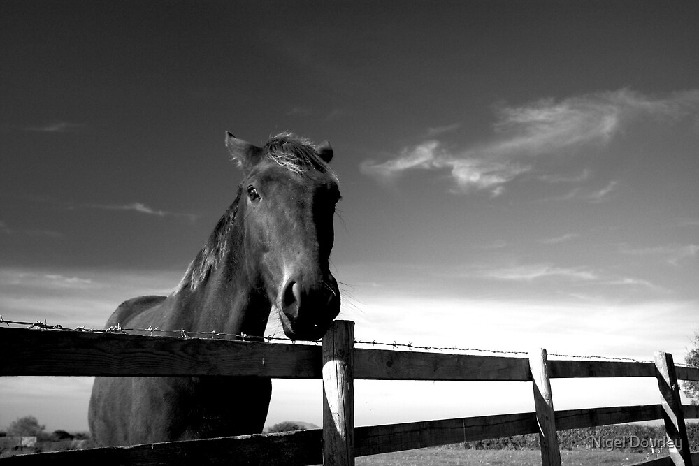 A Horse, Of Course! by Nigel Dourley