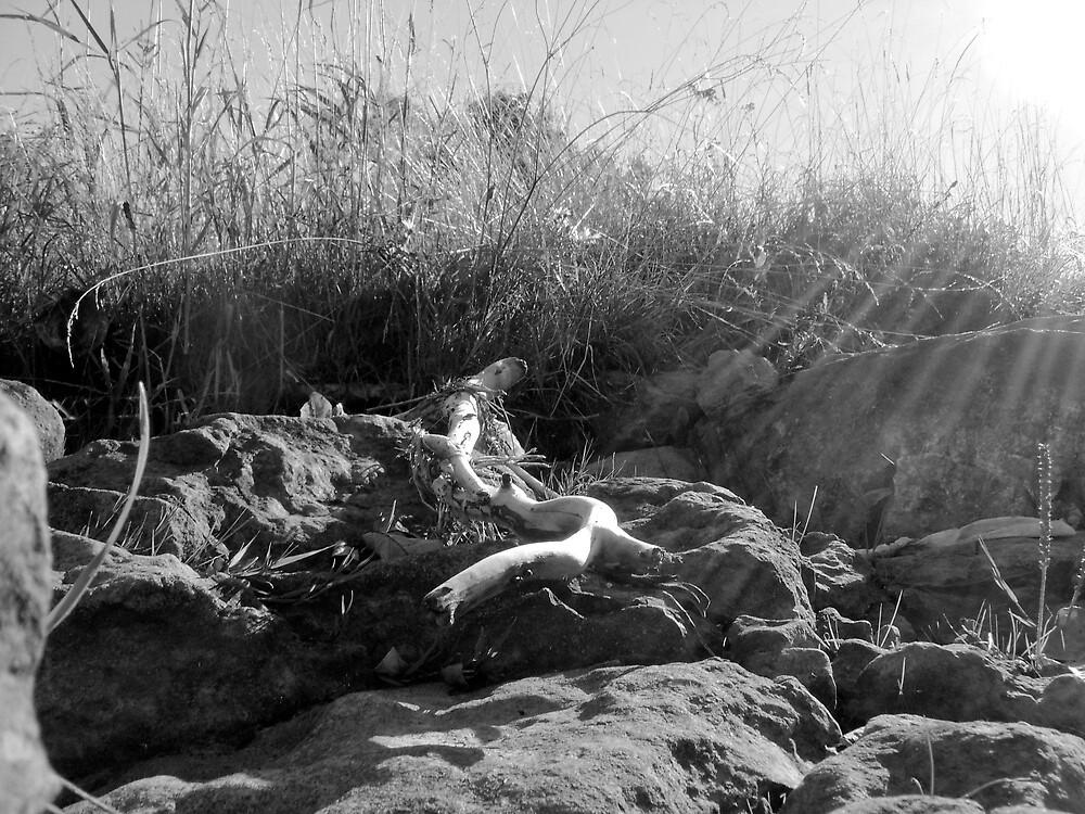 Sunshine  by Fernlee