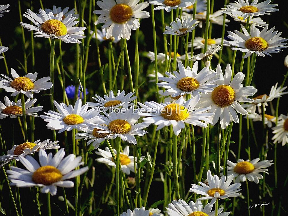 Daisy Forest by © Joe  Beasley IPA