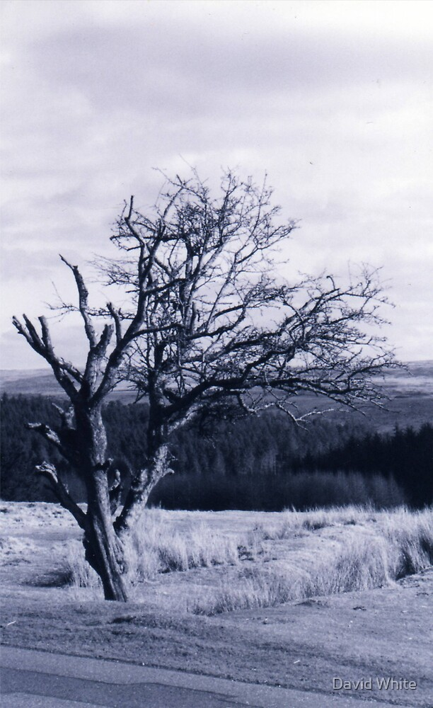 I stand Alone  by David White
