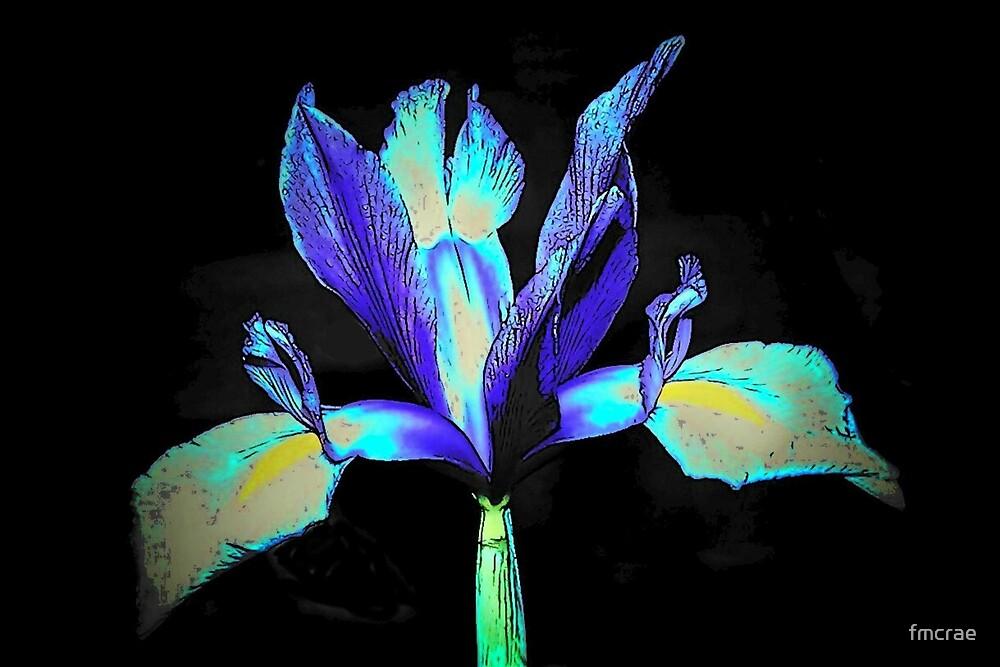 My Iris by fmcrae
