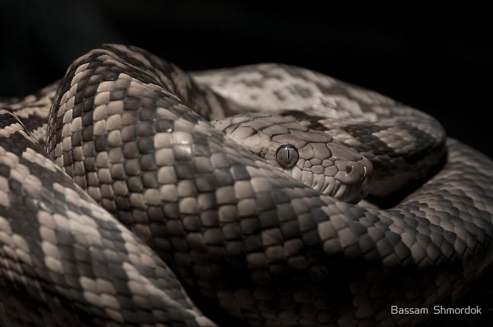 Snake by Bassam  Shmordok