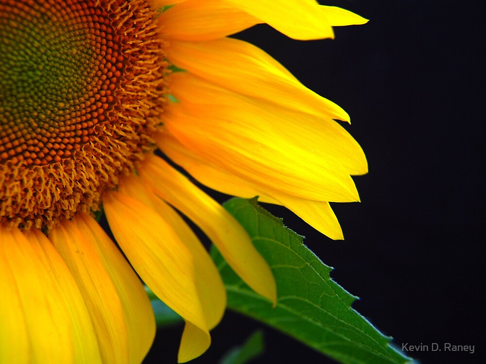Peeking Sun by Kevin D. Raney