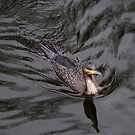 Cormorant by Bluesrose