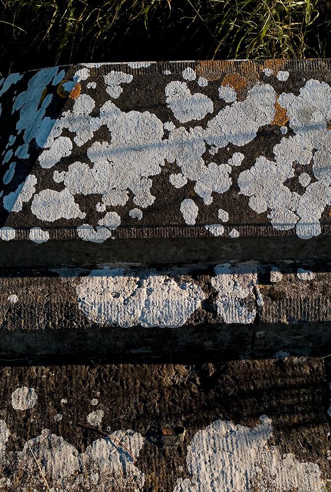 Lichen by JimWhitham
