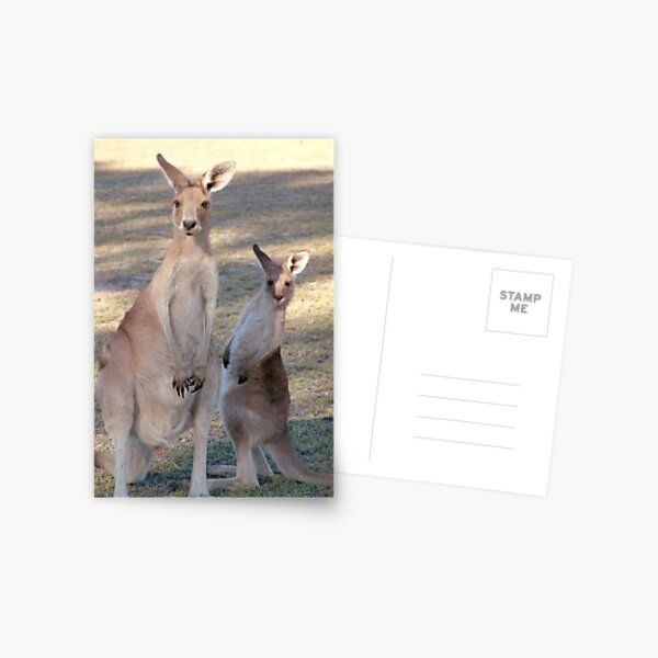 Kangaroo with Joey Postcard