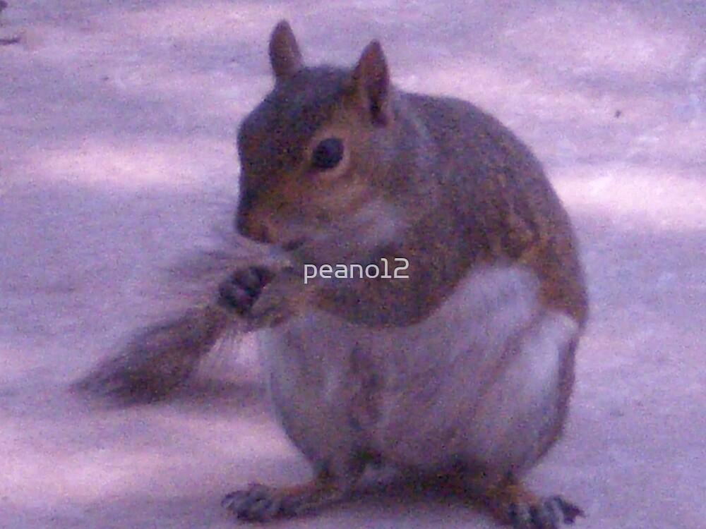 Squirrel by peano12