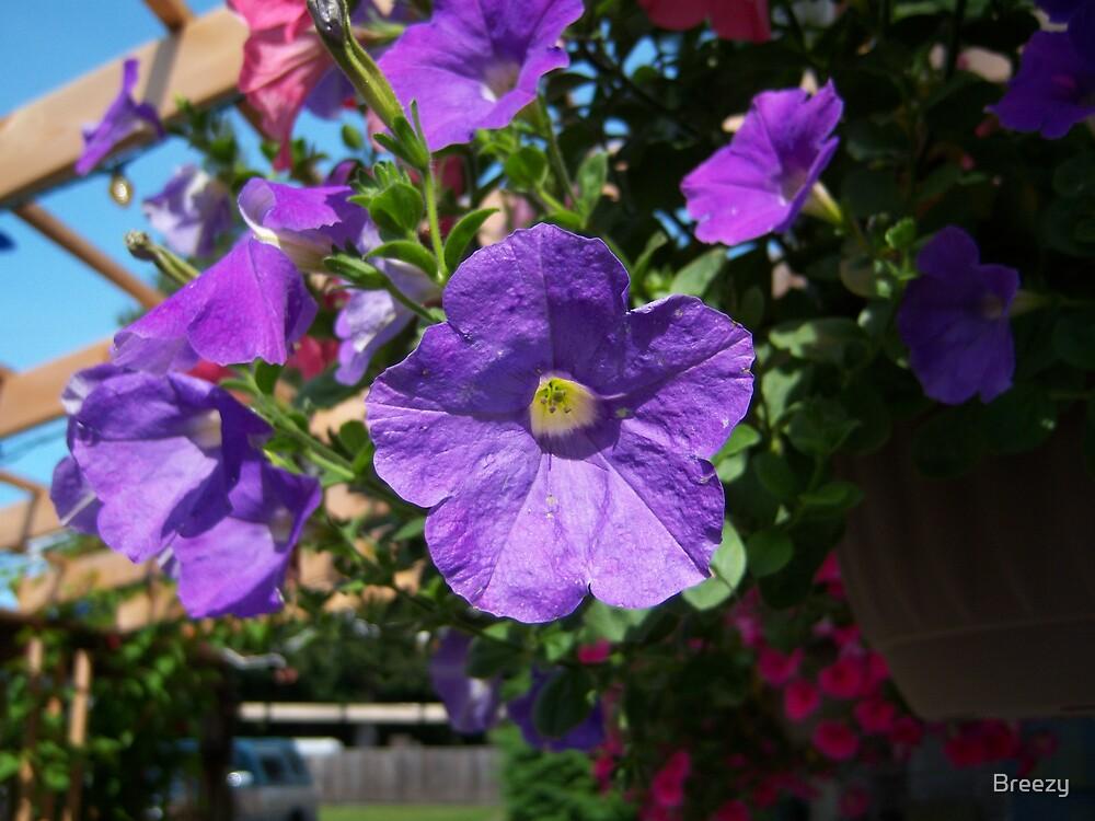 Purple Flower by Breezy