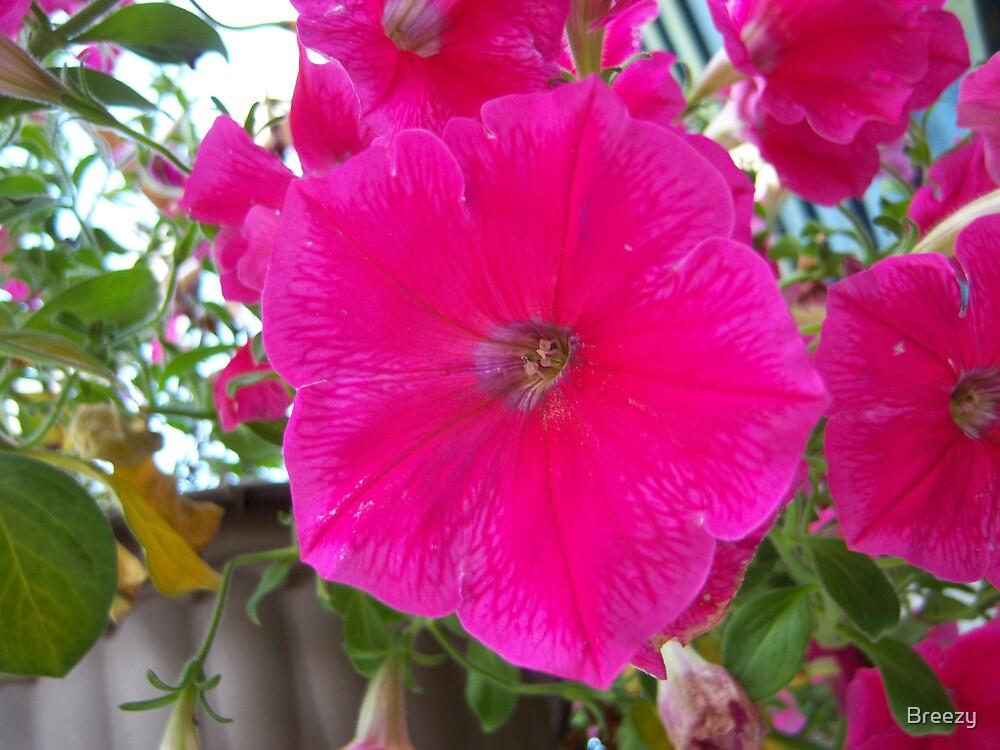 Pinkish by Breezy