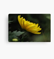 The Master Strokes of Nature Canvas Print