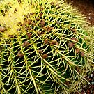 Cacti by malcblue