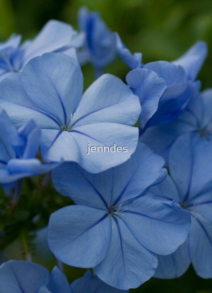 Periwinkle Hydrangea by jenndes
