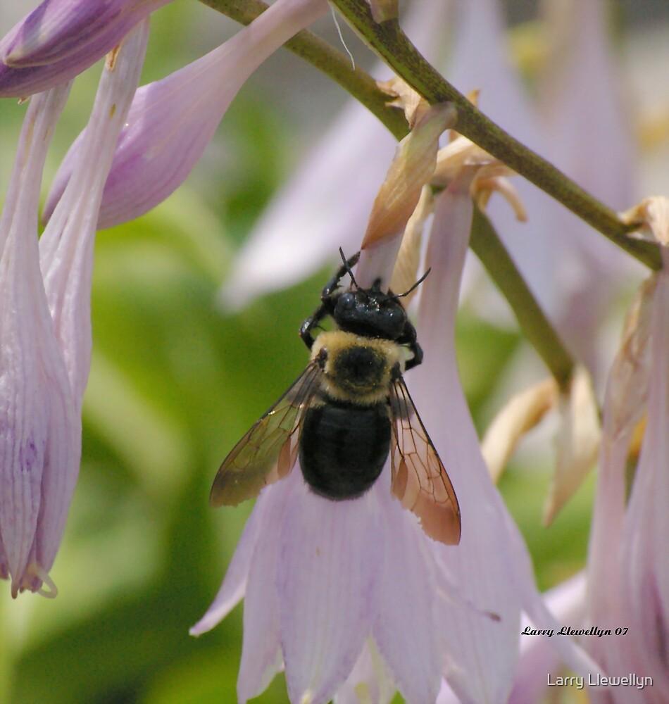 """An """"ole Worker Bee"""" by Larry Llewellyn"""