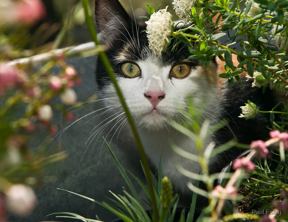 Kitten peering through plants by Paul Foley