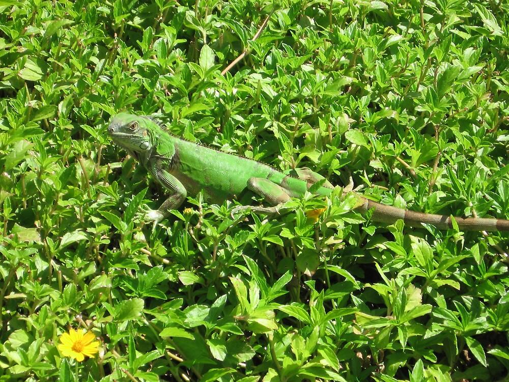 Green Iguana by Harriette Knight