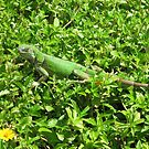 Green Iguana by Harriette Knight