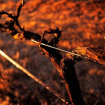 Winter Vine by foles