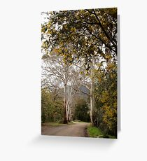 Ghost Gums - Mountain Ash and Mt Macedon Greeting Card