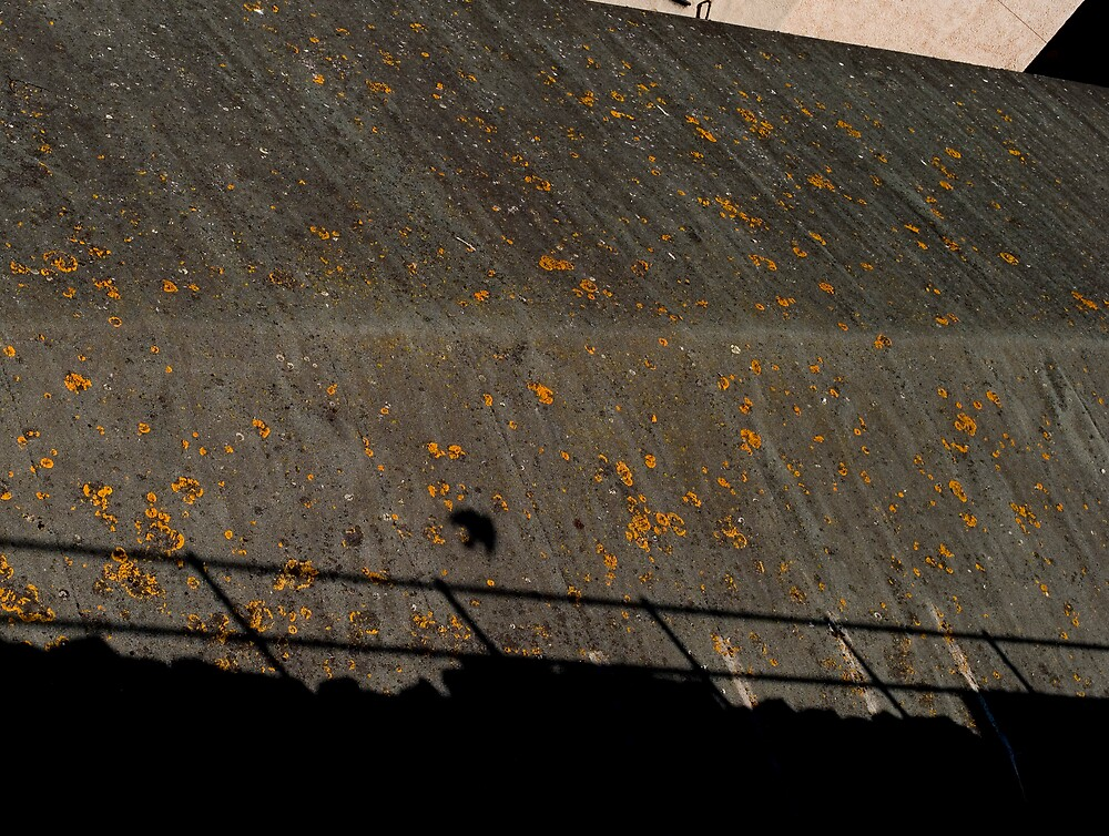 Bird shadow,roof top, Conway by JimWhitham