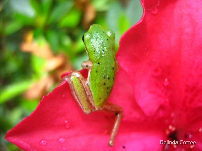 little spotty by Belinda Cottee