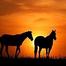 Country Sunrise by Annette Blattman