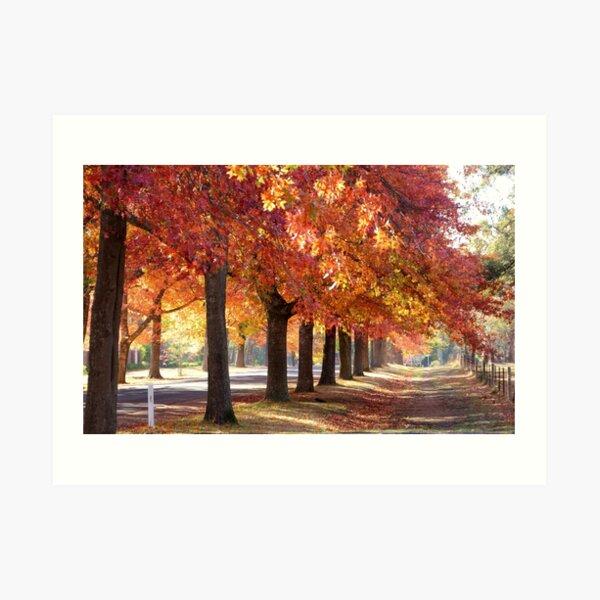 Honour Avenue - the trees Art Print