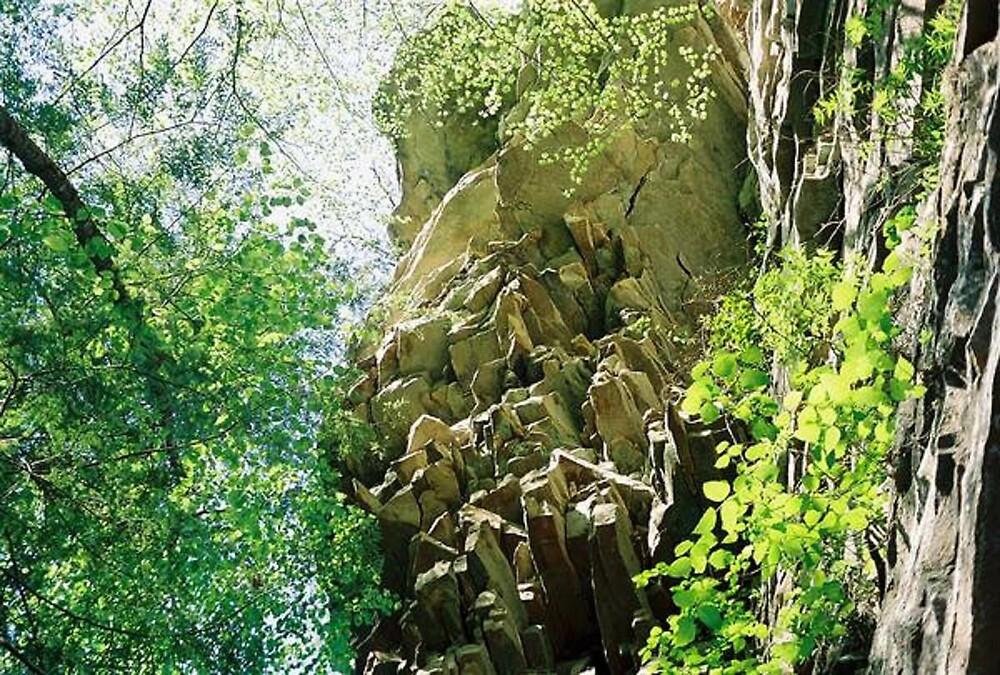 Cloudland Canyon Cliff by Meggerhun