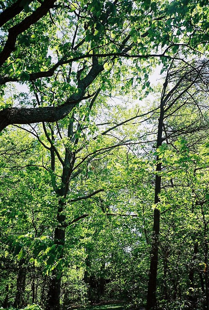 Trees! by Meggerhun