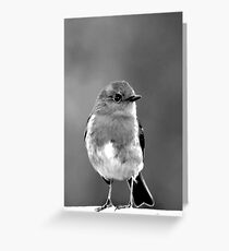 Small Bird on Fence Greeting Card