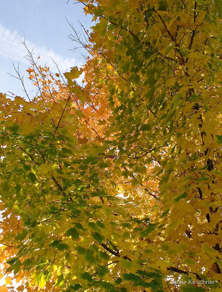 Leaves by Jamie Kirschner