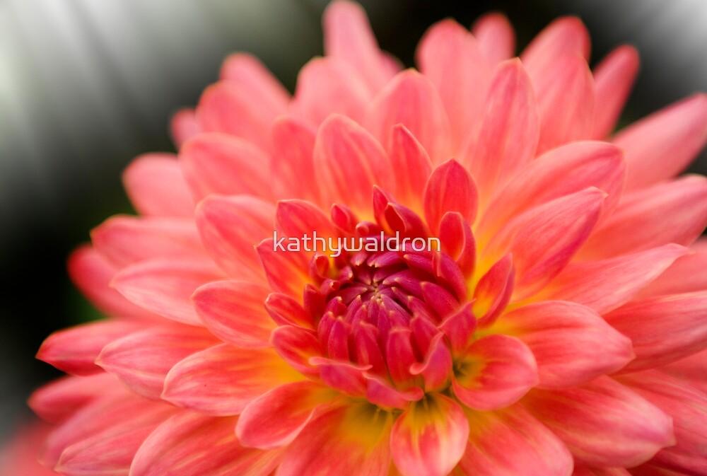Pink Dahlia by kathywaldron