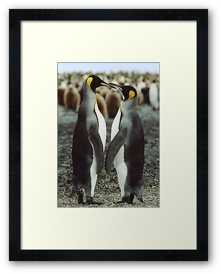 Penguin Love by Steve Bulford