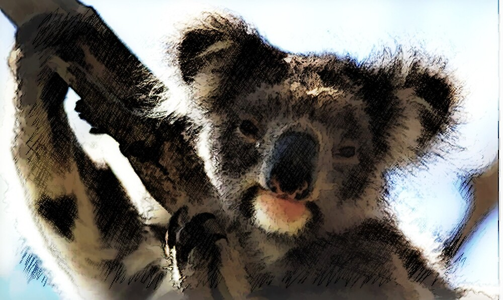 koala by andysaville