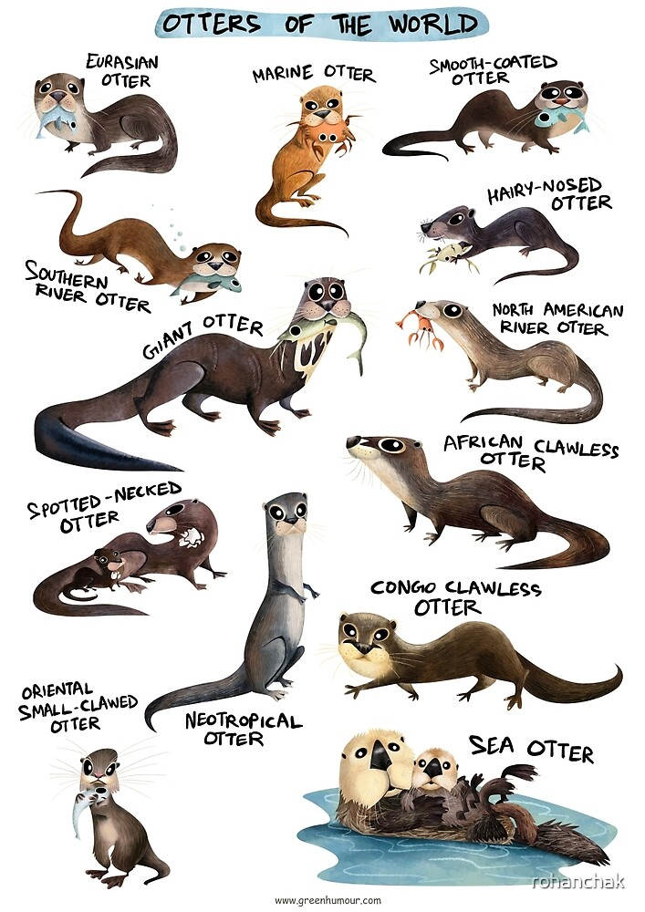 Otters of the World by rohanchak
