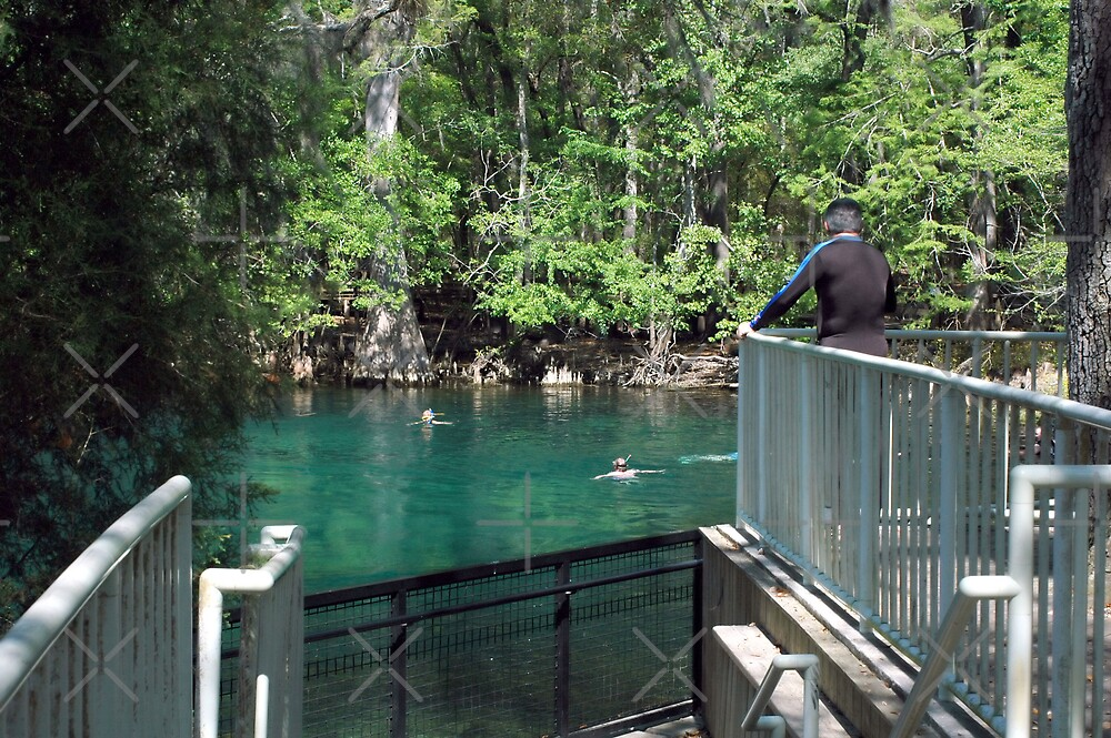 Diver Surveying the Spring by Stacey Lynn Payne