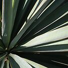 Yucca  by stephenmakesart