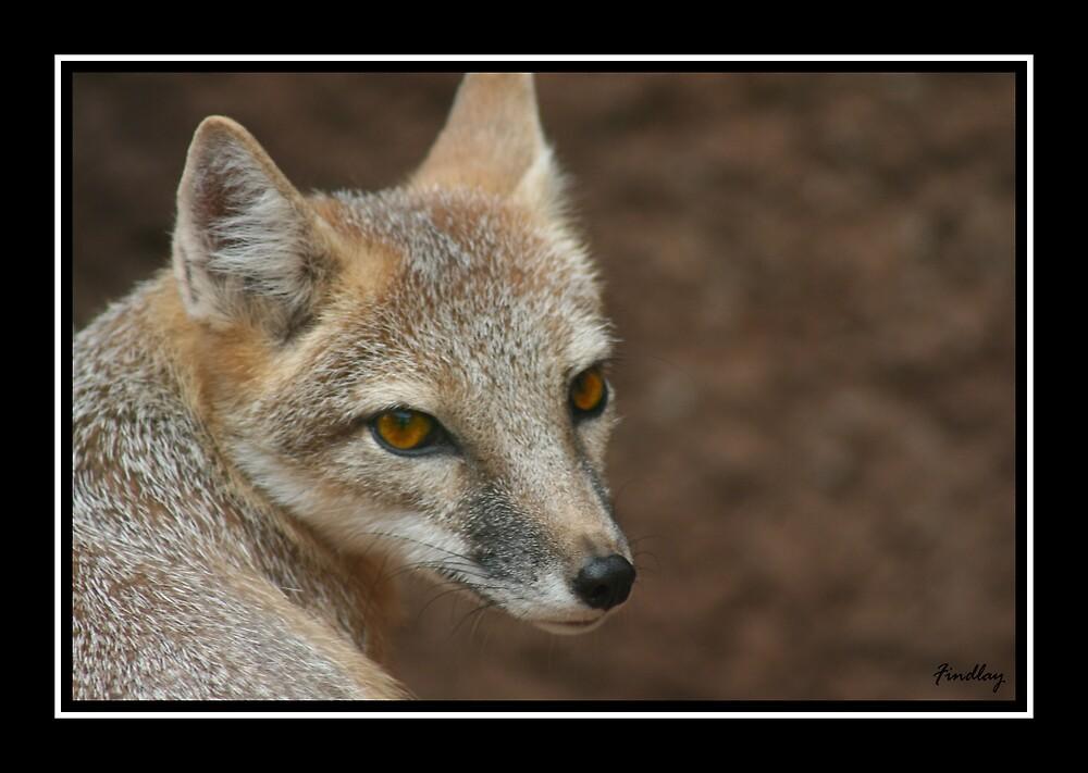 Foxy Foxy by DanidaeSkye