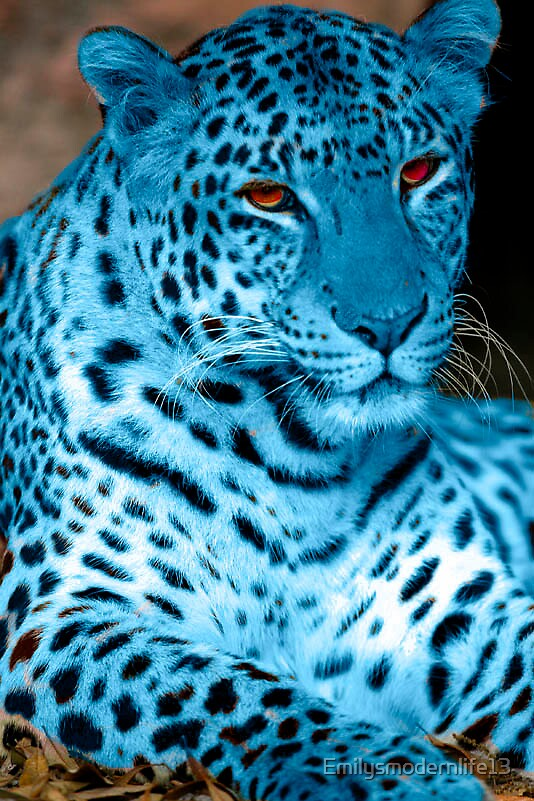 Blue Cheetah by Emilysmodernlife13