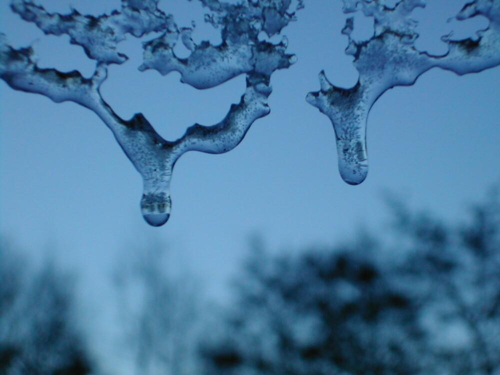 icicle by Freya Gamble
