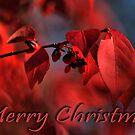 Merry Christmas by Robert Burns Miller
