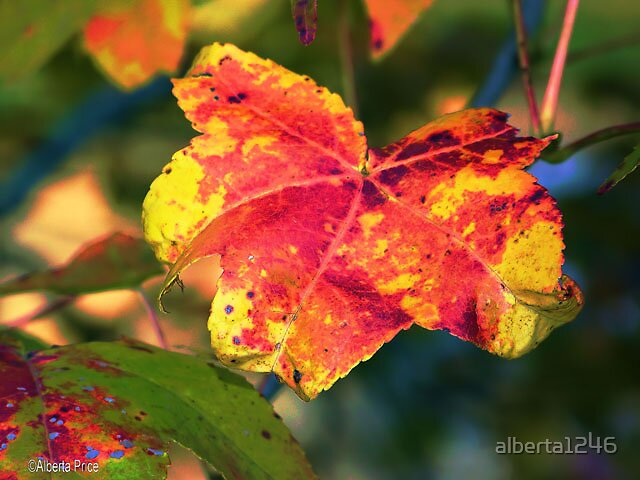 Yellow Leaf by alberta1246